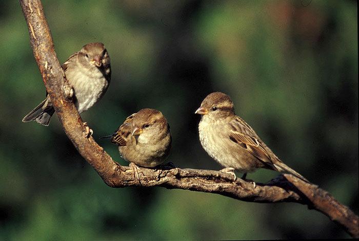 Non abbiate dunque paura: voi valete più di molti passeri!» | CASA ...