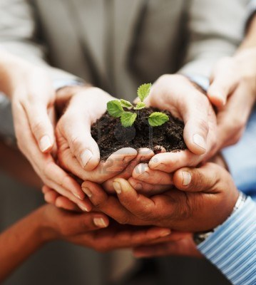 6460838-crescita-del-business--closeup-di-holding-verde-mani-pianta-indicante-teamwork
